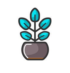indoor plant in pot with unusual turquoise leaves vector image