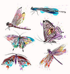 set of detailed butterflies for design vector image