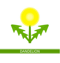 Dandelion icon vector