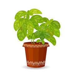 fresh basil herb in a flower pot vector image