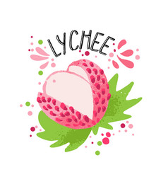 hand draw colored lichee pink vector image