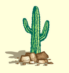 lonely cactus vector image