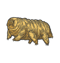 tardigrade water bear sketch engraving vector image