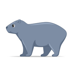 wombat animal standing on a white background vector image