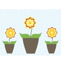 Summer spring colorful flowers in pot cosy home vector image vector image