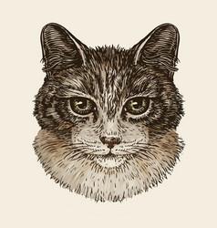 drawn portrait of cute kitten cat animal pet vector image vector image