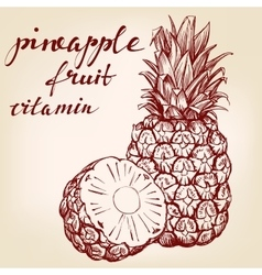 Fruit pineapple set hand drawn llustration vector