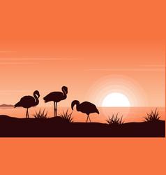flamingo on riverbank at vector image
