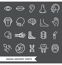 Human anatomy body parts detailed icons set vector image