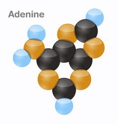 Adenine a pyrimidine nucleobase molecule 3d vector