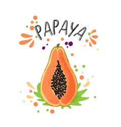 hand draw colored papaya vector image