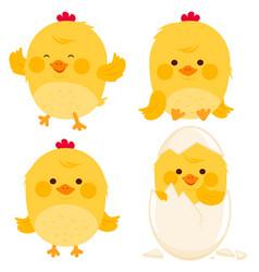 little cute chicks vector image