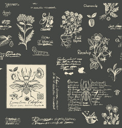 seamless pattern with hand-drawn herbs and beetles vector image