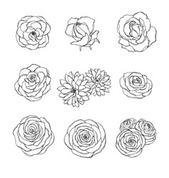 Hand drawn set of rose camellia peony flowers vector