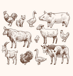 Sketch farm animals pig and cat bull and cow vector