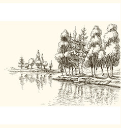Trees on lake shore or river bank drawing vector
