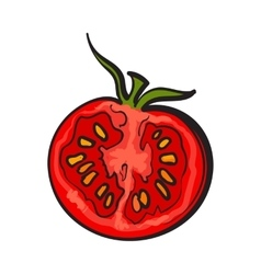 Sketch style drawing of ripe red half tomato vector