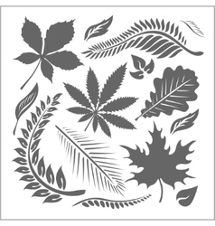 Leaf collection - set vector