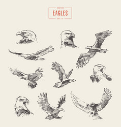 set realistic eagles hand drawn sketch vector image