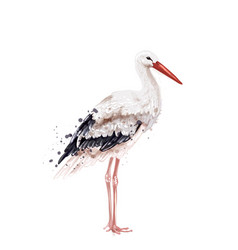 stork watercolor isolated on white icon painted vector image
