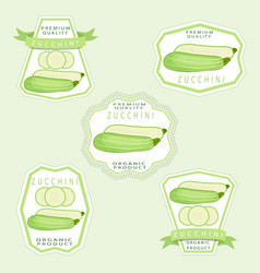 the zucchini vector image