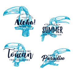 Toucan exotic bird sketch lettering vector