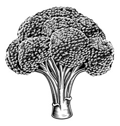 Vintage retro woodcut broccoli vector