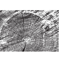wood texture fiber and crack vector image