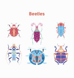 set drawn beautiful beetles vector image vector image