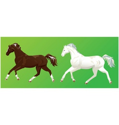 2 horses on green background vector