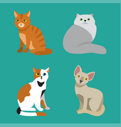 Cat breed cute pet portrait fluffy young adorable vector