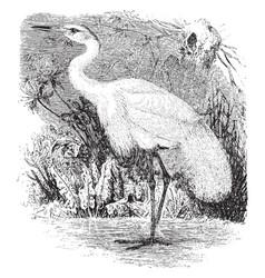 European great white egret vintage vector