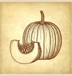ink sketch of pumpkin vector image