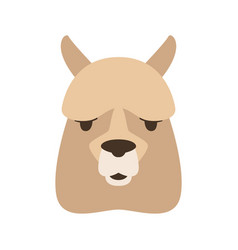 lama face flat style vector image