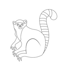 Lemur outline drawing coloring book an animal vector