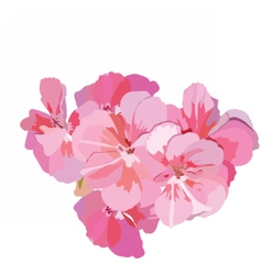 Pink flowers bouquet isolated on white vector