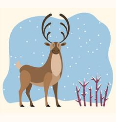 Reindeer stand in winter forest hart antlers vector