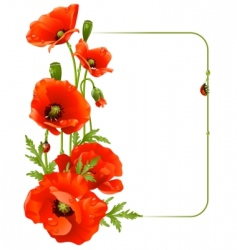 red poppy frame vector image vector image