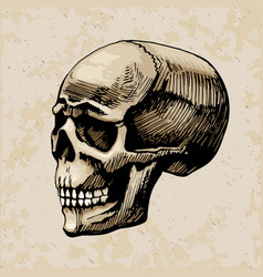 skull man colored painte vector image vector image