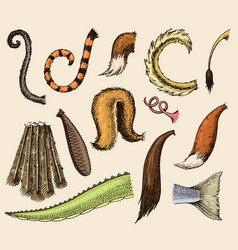 animal tail animalistic tailed breast with vector image vector image