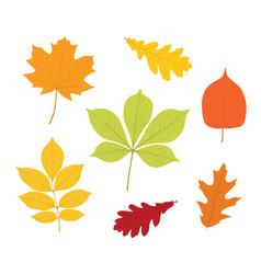 autumn leaves set isolated on white background vector image
