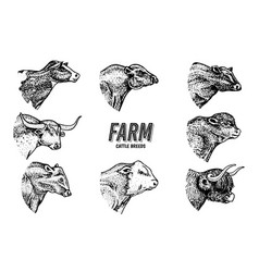 Cows set in vintage style cattle heads longhorn vector