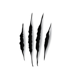 eagle claw marks scratches predator bird nails vector image