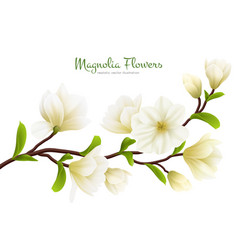 realistic white magnolia flower composition vector image