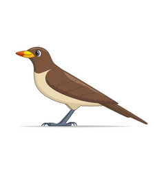 yellow billed oxpecker bird on a white background vector image