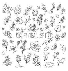 flowers berries and leaves collection floral vector image