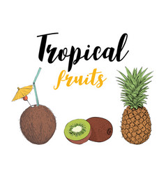 tropical fruit kiwi pineapple coconut cocktail vector image vector image