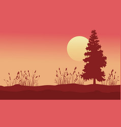 Beauty scenery with spruce and grass at sunrise vector