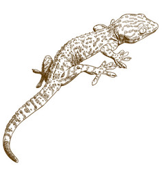 Engraving of gecko vector