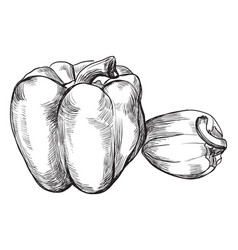 hand drawing fruit-5 vector image